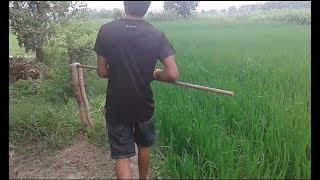 गाँव का एक लड़का दिखाया बहादुरी - सांप को किया दफ़न