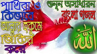 New Hit Bangla Gojol | Pakhider Jikir | Hit Bangla Gojol 2018 | Bangla Gojol | Islamic Bd