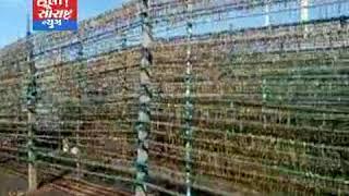 જાફરાબાદ-ભારે વરસાદ વરસતા સાગર ખેડૂતોને મોટું નુકસાન