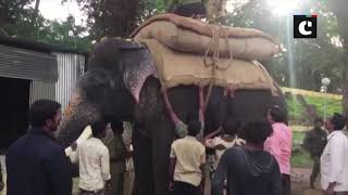 Mysuru Dasara: Rehearsal of elephants for parade begins