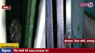 INN24 - आतंक मचा रहा तेंदुआ अब पिंजरे में फंस चुका