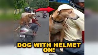 VIRAL VIDEO: Dog with Helmet on!