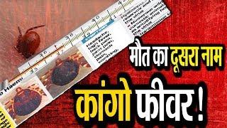 क्या है Congo Bukhar!, कैसे होती है ये बीमारी और क्या हैं इसके लक्षण?    Congo fever in Rajasthan   