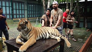 Playing With Real Tigers ????- Thailand Trip[EP-1]