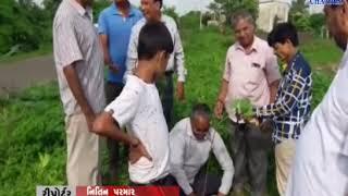 Mangrol |  A plantation program was organized | ABTAK MEDIA