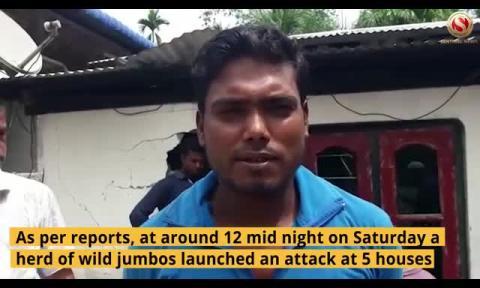 Man-Elephant Conflict: Locals spend sleepless night at Bihali in Biswanath