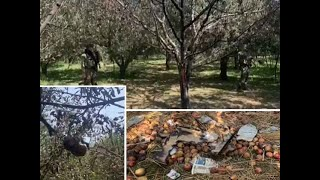 Terrorists target apple orchards to disrupt local businesses in J-K