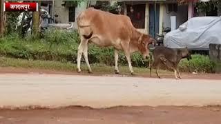 INN24 - जानवरो में झलकी इंसानियत की तस्वीर, देखिये ये विडियो