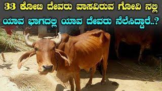 33 ಕೋಟಿ ದೇವರು ವಾಸವಿರುವ ಗೋವಿನಲ್ಲಿ ಯಾವ ಭಾಗದಲ್ಲಿ ಯಾವ ದೇವರು ನೆಲೆಸಿದ್ದಾರೆ? || Top Kannada TV