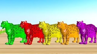 Animales salvajes nadando y cambiando de color - Videos Para niños
