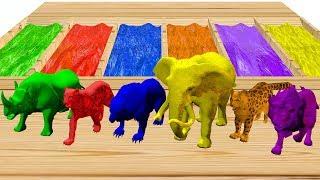 Animales salvajes que nadan en aguas coloridas y son hermosos - Videos Para niños