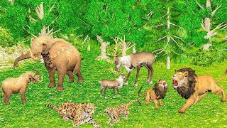 Los animales salvajes y sus bebés encuentran familia - Wrong Baby Matching Videos Para niños