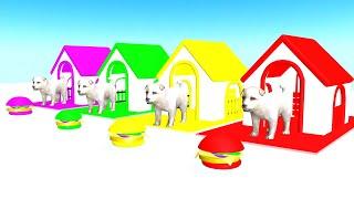 Cachorro comiendo hamburguesas y cambiando de color - Videos Para niños