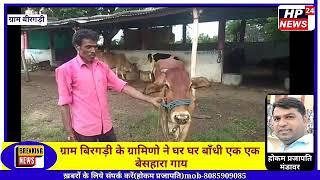 ग्राम बिरगड़ी के ग्रामीणों ने घर घर बाँधी बेसहारा गाय, अगर कोई कि छोड़ेगा तो भरना पड़ेगा जुर्माना