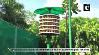 GDA sets up homes for birds in housing societies