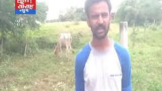 બનાસકાંઠા-ફતેપુરામાં ગાયને અપાય સારવાર