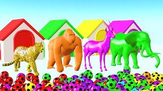 Animales salvajes que juegan con fútbol y cambian de color - Videos Para niños.