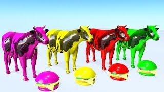 Las vacas comen hamburguesas y cambian de color - Videos Para niños