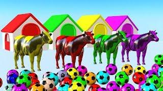 Animal de granja (vaca) jugando con mucha pelota y transformán en un animal colorido - Para niños