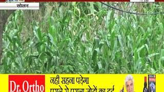#SOLAN : दाड़ो देवरिया पंचायत के गांवों के खेत हुए पानी-पानी