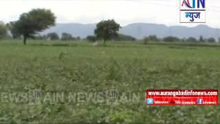 Aurangabad:वाळूज परिसरातील वन्य प्राण्याकडून पिकाचे नुकसान