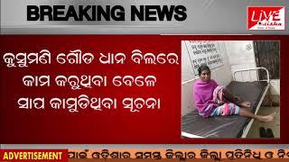 BREAKING NEWS : Snake bite in kashipur, 1 injured