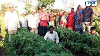औरंगाबाद : शेतकऱ्यांने वाग्याचे घेतले विक्रमी उत्पादन, भांडेगावच्या शेतकऱ्यांच्या मेहनतीला फळ