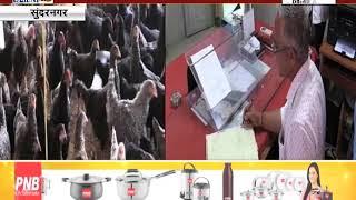 #SUNDERNAGAR: मुर्गी पालन की ओर बढ़ रहा किसानों का रूझान, उत्पादन से ज्यादा है अंडे की खपत