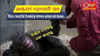 What a beautiful friendship between animal and human...????