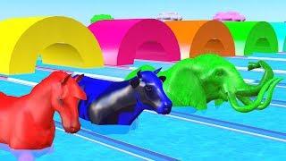 Belajar Hewan liar untuk anak-anak - Mainan binatang untuk anak anak - Videos Para Niños #52