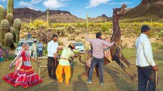 Dj Wala Gano Laga Re Shaadi Ko || डी जे वाला गानो लगा शादी को || Maina ™