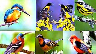 Bird's Activity.