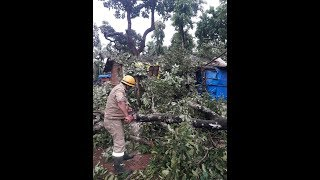 MOLLEM: Cyclonic Winds Cause Collapse Trees To Collaspe On Houses, Shatter Lives!
