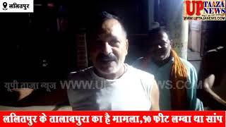 ललितपुर में रिहायशी इलाके में निकला अजगर साॅंप