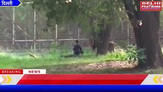 दिल्ली के चिड़ियाघर में बब्बर शेर के बाड़े में कूदा एक व्यक्ति I DKP