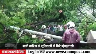 Tree collapses in Sion Koliwada's Punjabi Camp, cars damaged