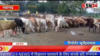 जांजगीर चाम्पा/नवागढ़/आदर्श गौठान अमोरा में गोवर्धन पूजा सम्पन्न हुआ एवं गायों को भोजन कराया गया...
