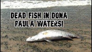 Dona Paula Locals To Meet New Goa Guv At Raj Bhavan On Swearing-In Ceremony Over Bumper Fish Kill