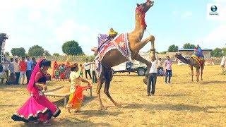 छज्जे ऊपर बोयो री यबाजरो खिल गयो फूल चेमेली को || Chajje upar Boyo Ri Bajro khil Dj video Song by Bh