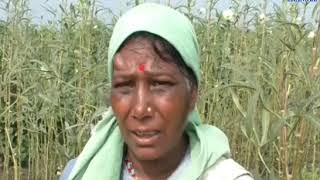 Dhoraji | Farmers worried about the deficient rainfall | ABTAK MEDIA