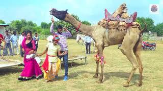 New Dj Rasiya || तू ही ले जा गुजर के - Tu Hi Le Ja Gujar Ke || Rajasthani Sekhawati