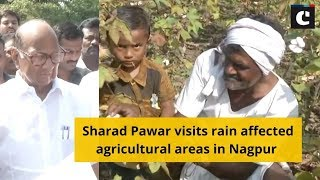 Sharad Pawar visits rain affected agricultural areas in Nagpur