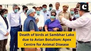 Death of birds at Sambhar Lake due to Avian Botulism: Apex Centre for Animal Disease