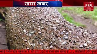 पैसे उगाने वाला पेड़ देखा है आपने THE NEWS INDIA