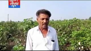 ઉપલેટા-ખેડૂતો દ્વારા લીલો દુકાળ જાહેર કરવા માંગ