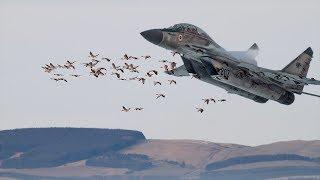 Birds cause Navy's MiG 29K to crash in Goa, probe ordered