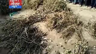 જામનગર-આંબળા ગામના ખેડૂતો દ્વારા પાકની હોળી કરી વિરોધ કર્યો