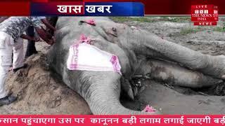 तबाही मचाने वाले ताकतवर हाथी की अचानक मौत कैसे हुई