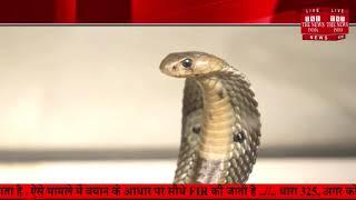 बैंक में घुसा सांप उसके बाद सब ऐसे छोड़कर भाग गए खुला बैंक छोड़कर.....THE NEWS INDIA
