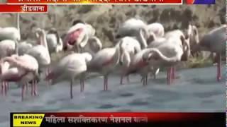 Migratory Birds   साइबेरिया  अन्य देशों से भी पसंदीदा स्थल डीडवाना में आते प्रवासी पक्षी
